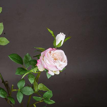 Pale Pink Garden Rose Spray