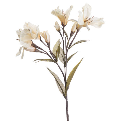Autumn Cream Alstroemeria Lily Spray