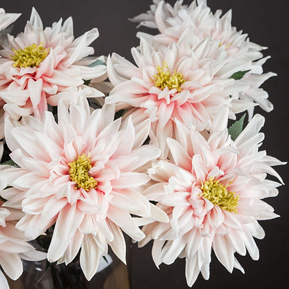 Lush Pink Dahlia