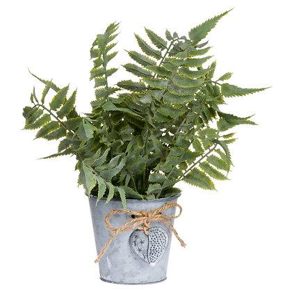 Sage Fern In A Tin Pot