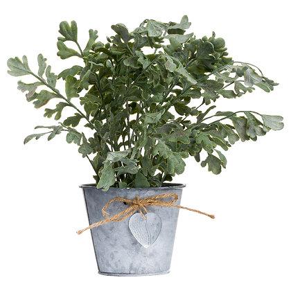 Herbs In Tin Pot