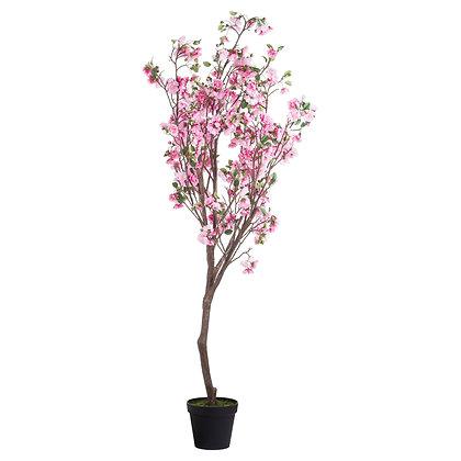 Large Cherry Blossom Tree