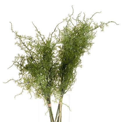 Asparagus Fern Bunch