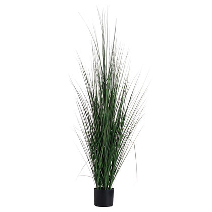Large Potted Tall Grass