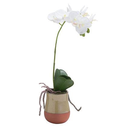 Orchid In Terracotta Glazed Pot
