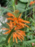 Palmenhaus in Lednice, Pflanzenpracht, orange Blüte, üppige Bepflanzung