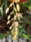 Palmenhaus in Lednice, Pflanzenpracht, gelbe Blüte