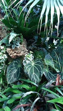Palmenhaus in Lednice, Pflanzenpracht, Palmen, Farn, üppige Bepflanzung