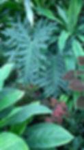 Palmenhaus in Lednice, Pflanzenpracht, üppige Bepflanzung