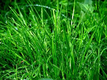 5 Tipps, wie ihre Pflanzen jetzt nicht verdursten