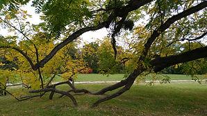 Herbstfärbung, Wurzeln schlagen