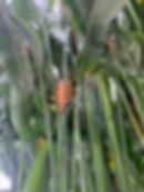 Palmenhaus in Lednice, Pflanzenpracht, Blüte