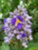 Palmenhaus in Lednice, Pflanzenpracht, violette, lila Blüte
