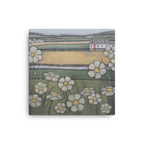 Canvas Print: Galloway Daisies