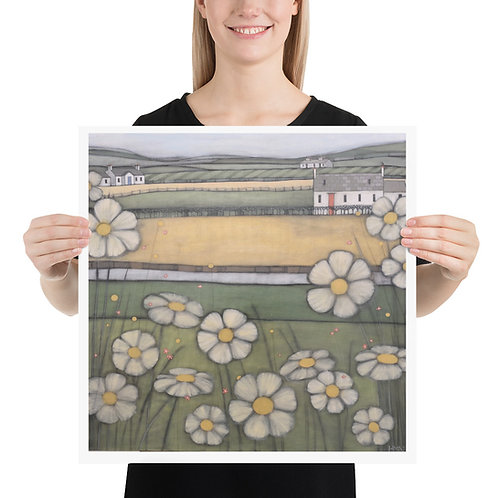 Print: Galloway Daisies