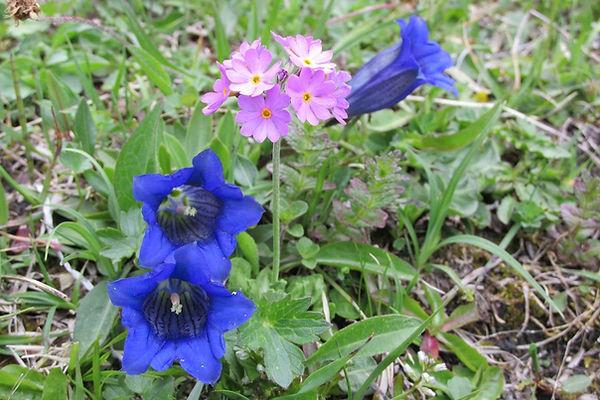 Blumen1.jpg