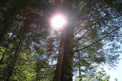 Erholung im nahen Wald