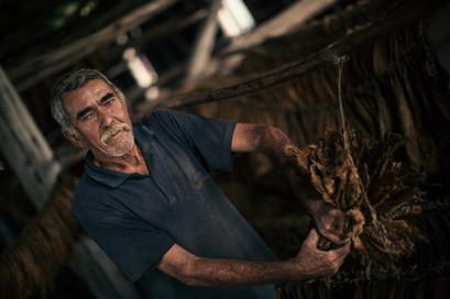 Zigarrenproduktion Kuba Vinales