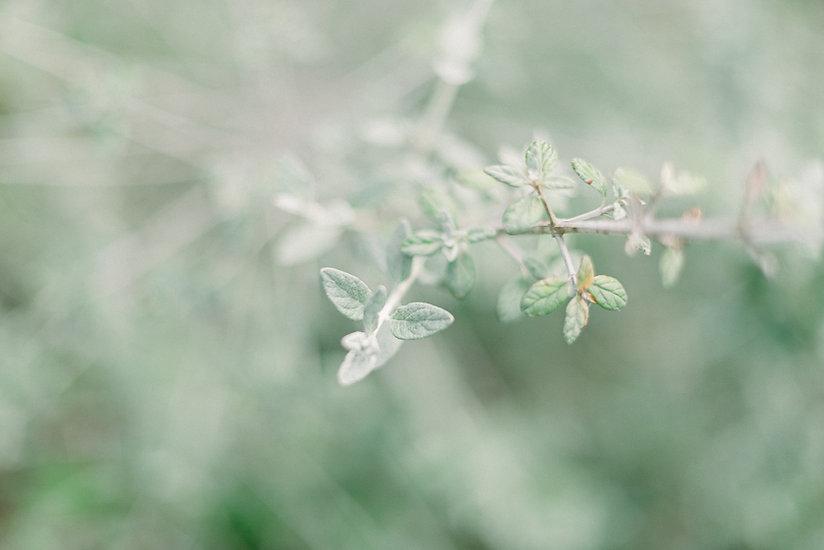 Cator-Woolford-Spring-9.jpg