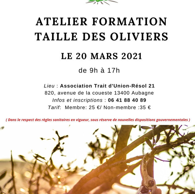 Formation Taille des oliviers