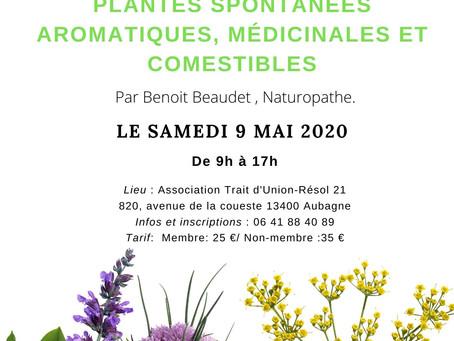 Atelier Plantes spontanées aromatiques, médicinales et comestibles
