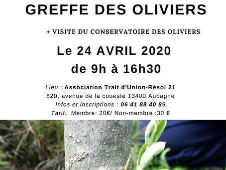 "Atelier Formation ""Greffe des oliviers"" le 24 avril 2020"