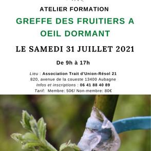 Atelier formation Greffe des fruitiers à œil dormant 31 juillet 2021.jpg