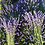 Thumbnail: Country Lavender