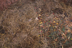 The compost pit