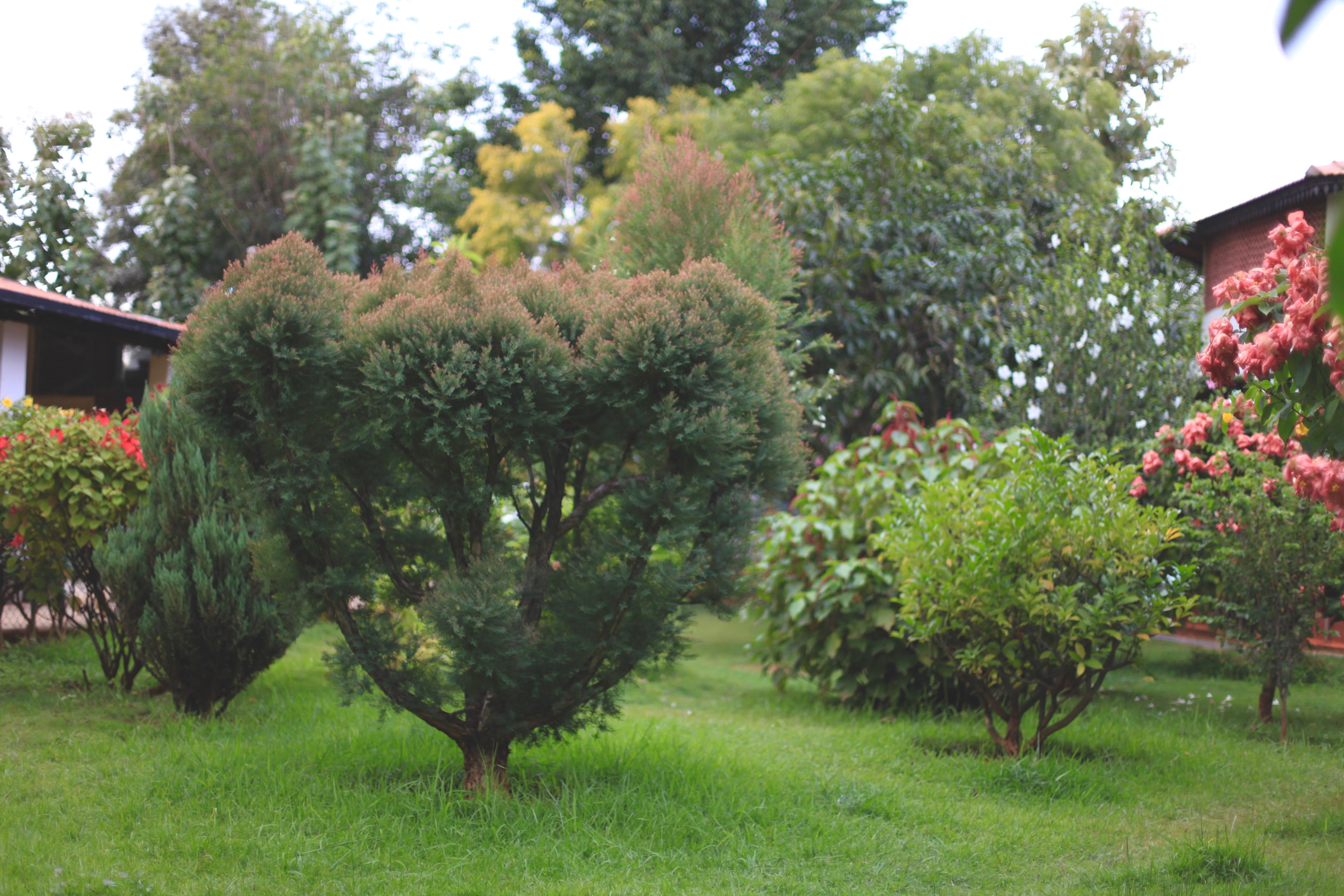 The spectacular garden