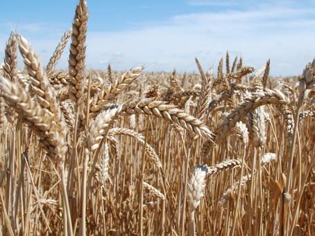 PLA slamky z biomasy nie sú tak BIO ako sa tvária