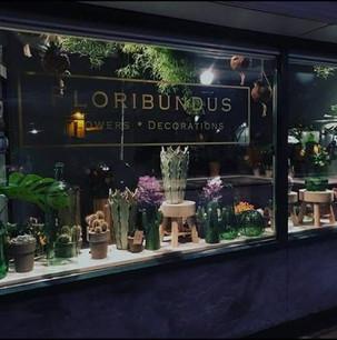 Loribundus