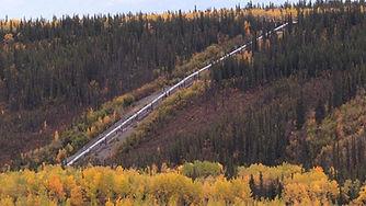 Pipeline-BC-Trees_page_thumb_.jpg