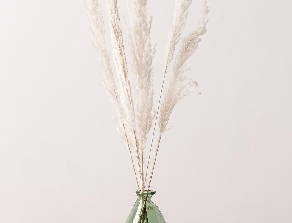 Pampasgras, weiß gebleicht