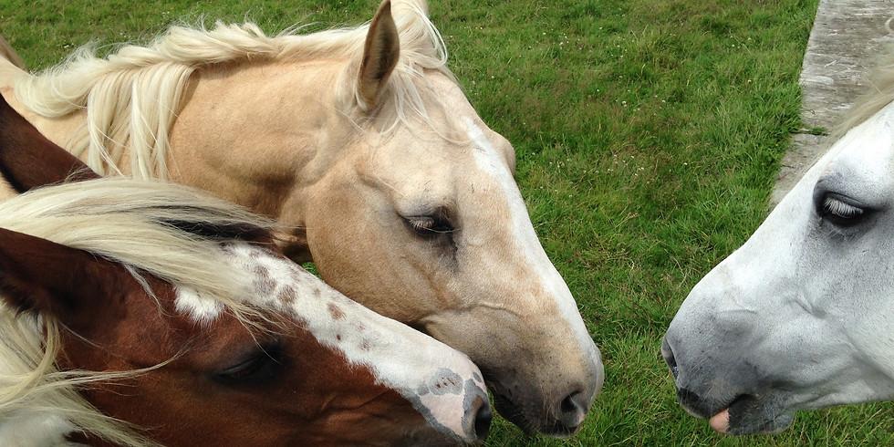 Equine Facilitated Human Development Talk