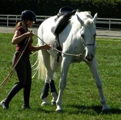 BringingHHTogether, Horses, Natural