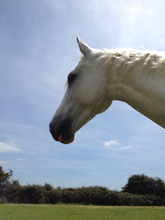 Horse, George, BringingHHTogether