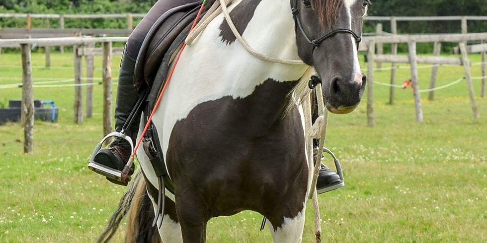 Communication in the saddle