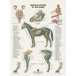 NERVOUS SYSTEM OF THE HORSE