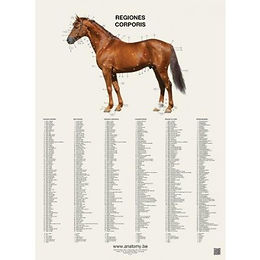REGIONS OF THE HORSE
