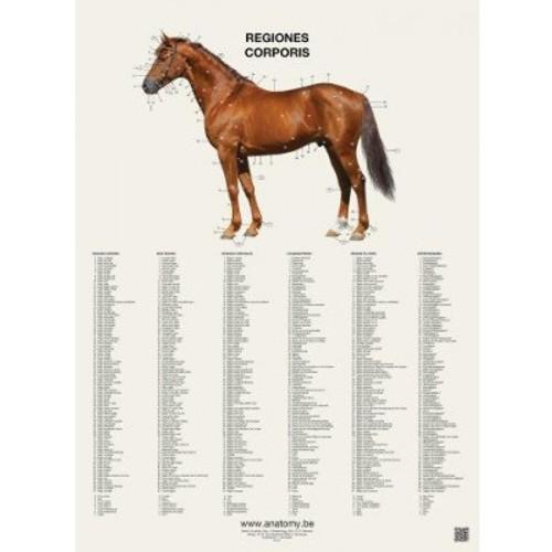 Horse Anatomy Vlaanderen Anatomy