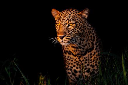 wildlifephotographer.jpg