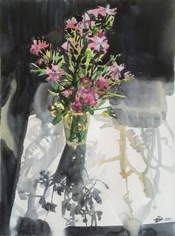 Field carnation