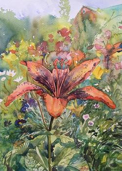 Лилия в саду