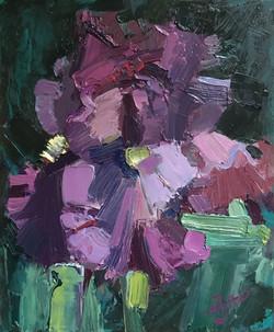 Розовый ирис