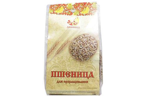 """Пшеница для проращивания """"Дивинка"""" 500г"""