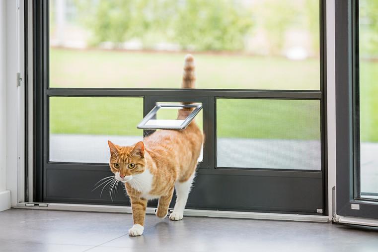 Insektenschutztür mit Katzenklappe