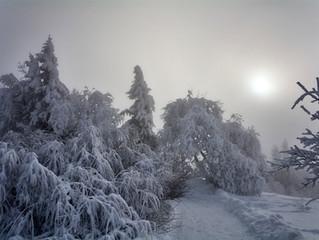 Nebel trifft Sonne