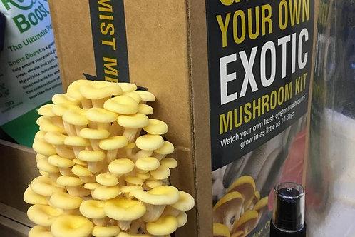 Yellow Oyster Mushroom Grow Kit