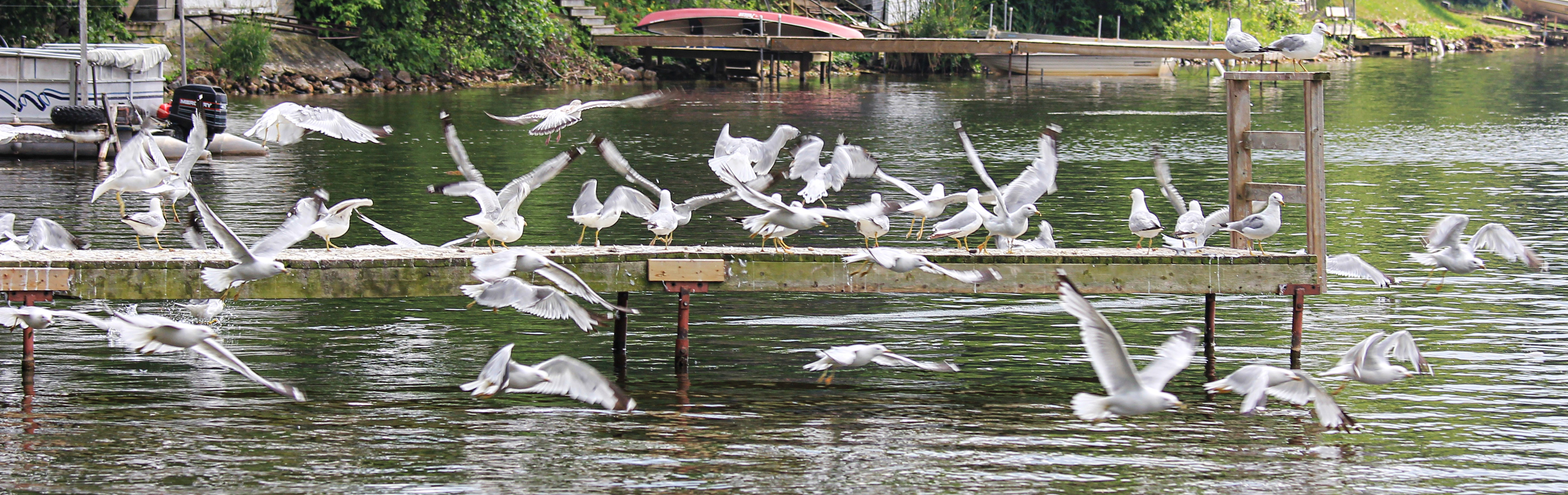 Sea gulls!